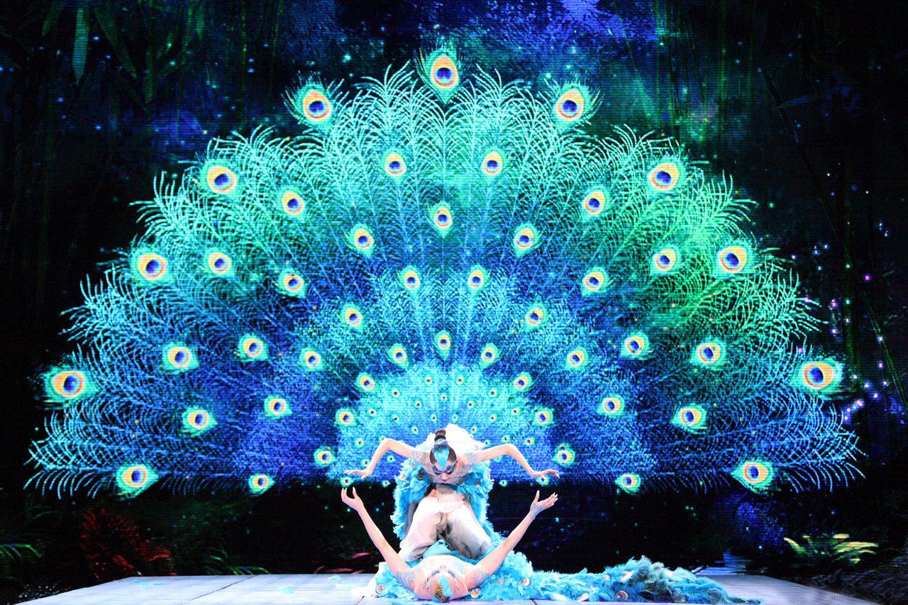 孔雀双人舞《雀之恋》-活动资源
