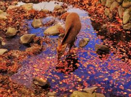 豆瓣秋季摄影大赛
