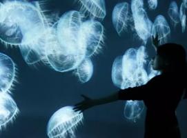 还在为海洋展发愁?教你无水环境打造互动海洋馆
