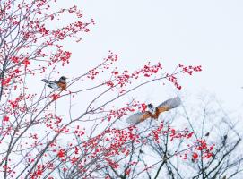 豆瓣冬季摄影大赛作品精选:这里有喜欢冬天的可能