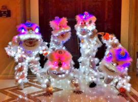 电光街舞狮表演,传统与潮流的对话